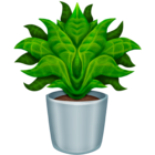 :potted_plant: